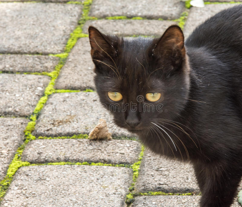 Le petit chat image stock
