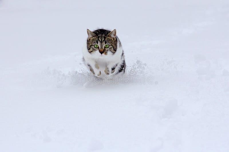 Le petit chat rebondit heureusement par la neige en hiver photos libres de droits