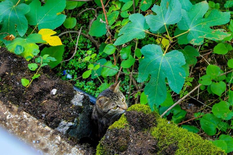 Le petit chat se cache photo stock