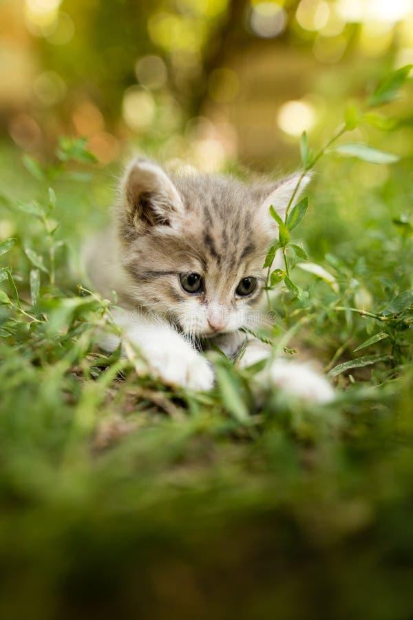 Le Petit Chaton Marche Dans L'herbe Verte Dehors Photo ...