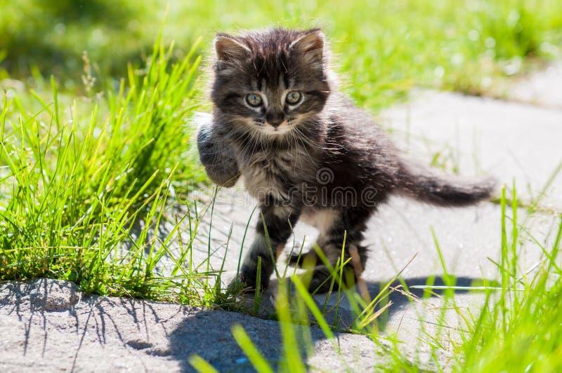 Chaton de marche drôle photo stock. Image du drôle, chat ...