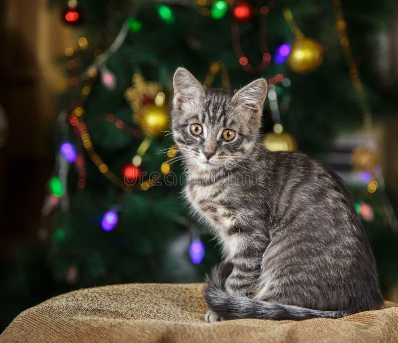 Le petit chaton tigré mignon se repose regardant l'appareil-photo sur un fond de fête image stock