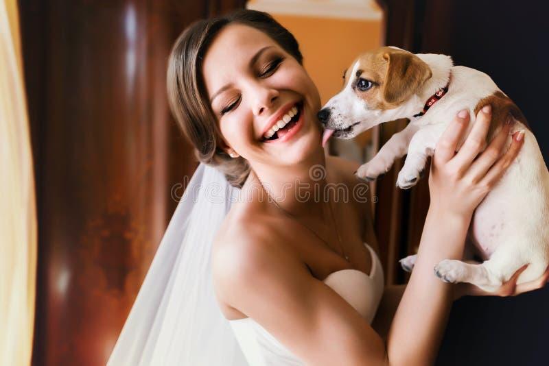 Le petit chien lèche un visage du ` s de jeune mariée image stock