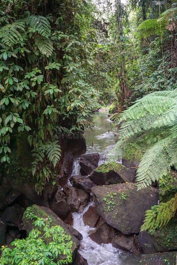 Le petit courant dans une forêt traversant la mousse a couvert des tronçons et des roches d'arbre images stock