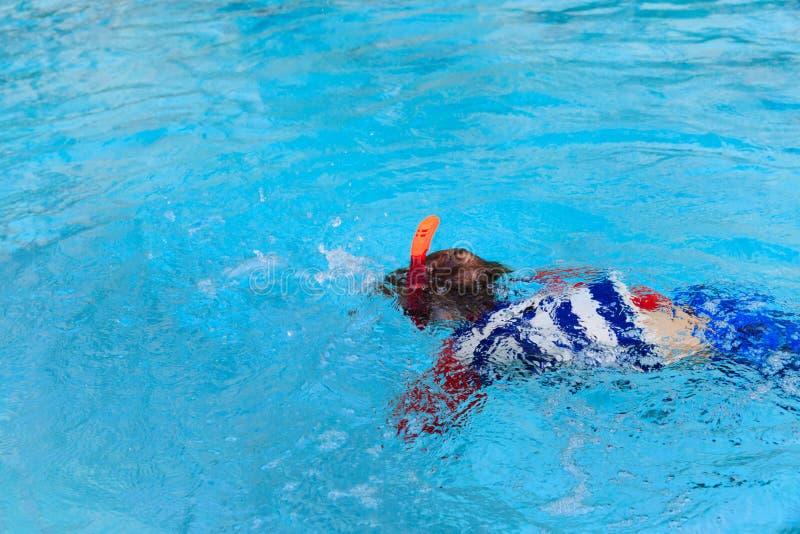 Le petit garçon apprend seule la natation dans la piscine photographie stock libre de droits