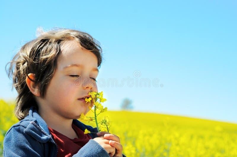 Le petit garçon sent la fleur de graine de colza images stock