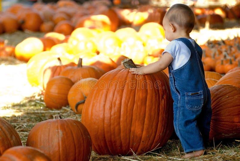 Le petit garçon trouve le grand potiron photo libre de droits