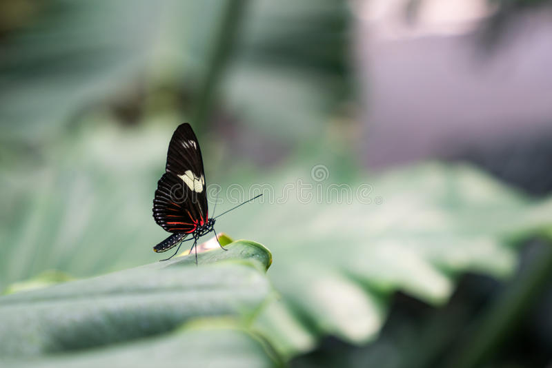 Le petit papillon parfait photos stock
