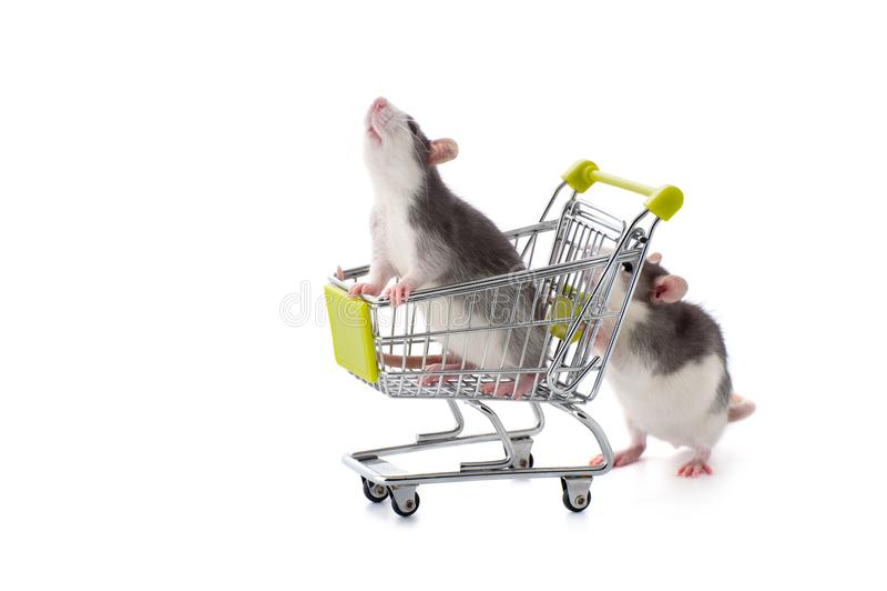 Le petit rat roule son parent dans le chariot acquéreur image libre de droits