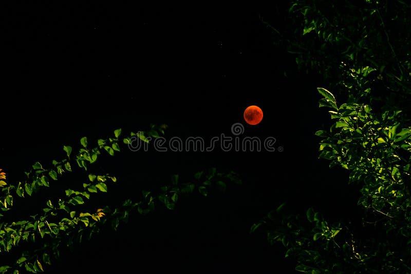 Le phenomene rouge de lune vu sur un ciel clair par des branches d'un arbre photos stock