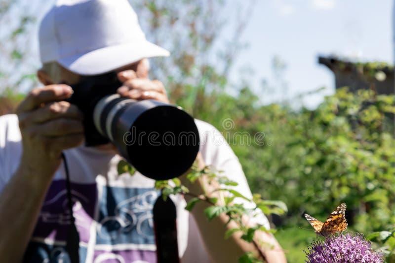 Le photographe photographie les papillons se reposant sur les fleurs violettes des oignons images stock