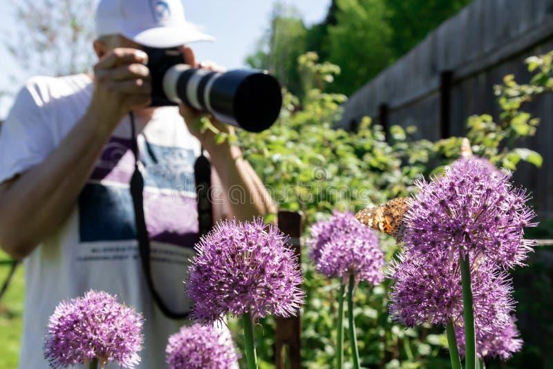 Le photographe photographie les papillons se reposant sur les fleurs violettes des oignons photo libre de droits
