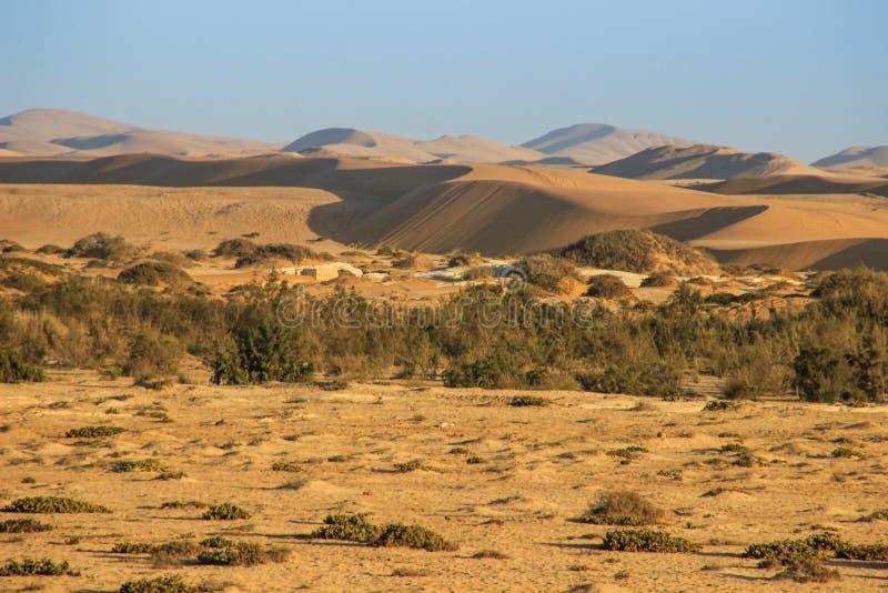 Le più alte dune di sabbia nel mondo al tramonto nel deserto di Namib, nel parco nazionale di Namib-Nacluft in Namibia fotografia stock