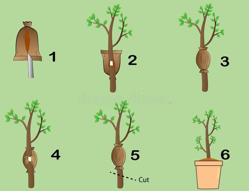 Le piante dell'innesto royalty illustrazione gratis