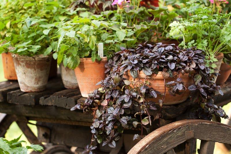 Le piante ed i fiori differenti in vasi ceramici stanno su un carretto immagini stock