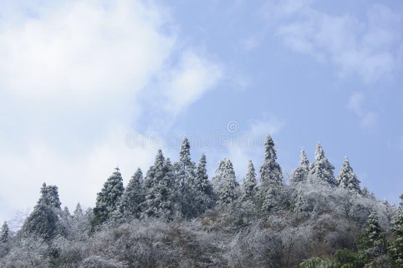 Le piante ed il paesaggio congelati del cielo blu nell'inverno fotografia stock