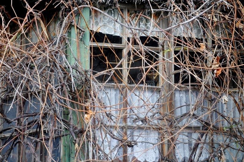 Le piante invase coprono una casa di legno abbandonata fotografia stock libera da diritti