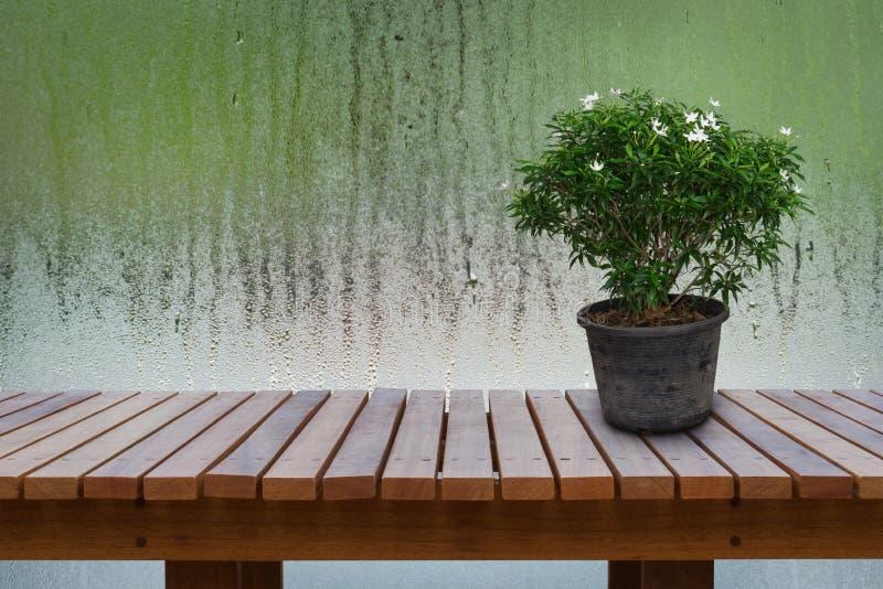 Le piante ornamentali verdi, bianco di fioritura in vecchio vaso di fiore sulla tavola di legno con fondo è gocce di acqua su vet immagine stock libera da diritti