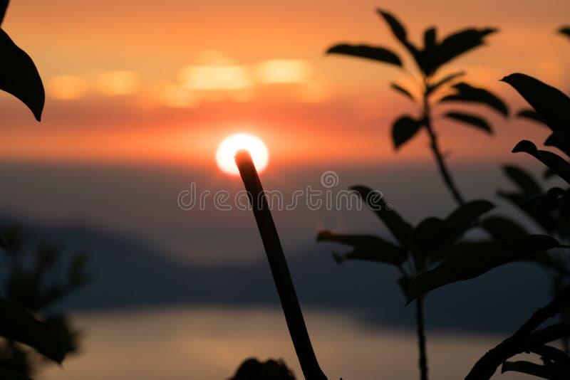 Le piante profilano durante il tramonto immagini stock libere da diritti