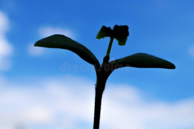 Le piante profilano sul cielo blu con i petali fotografia stock libera da diritti
