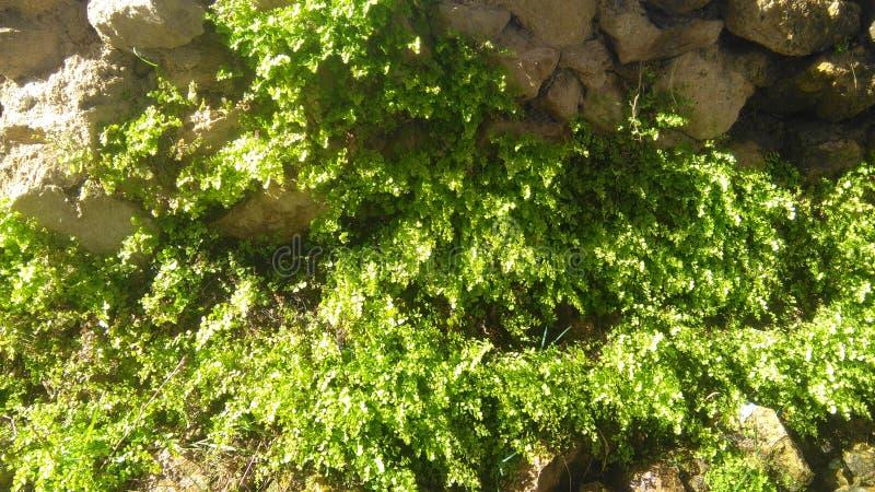 Le piante si sviluppano su umidità fotografia stock