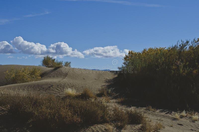 Le piante sulle dune di sabbia del deserto immagine stock