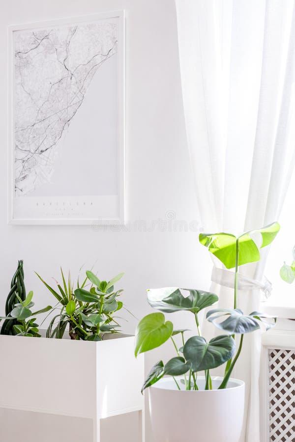 Le piante verdi in una piantatrice bianca creativa ed in una città tracciano il manifesto o fotografia stock