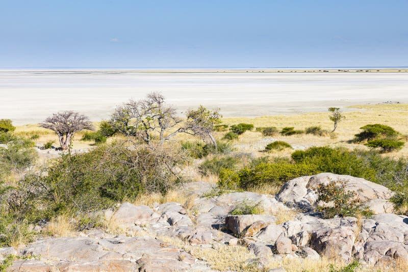 Le pianure del sale intorno all'isola di Lekhubu fotografie stock