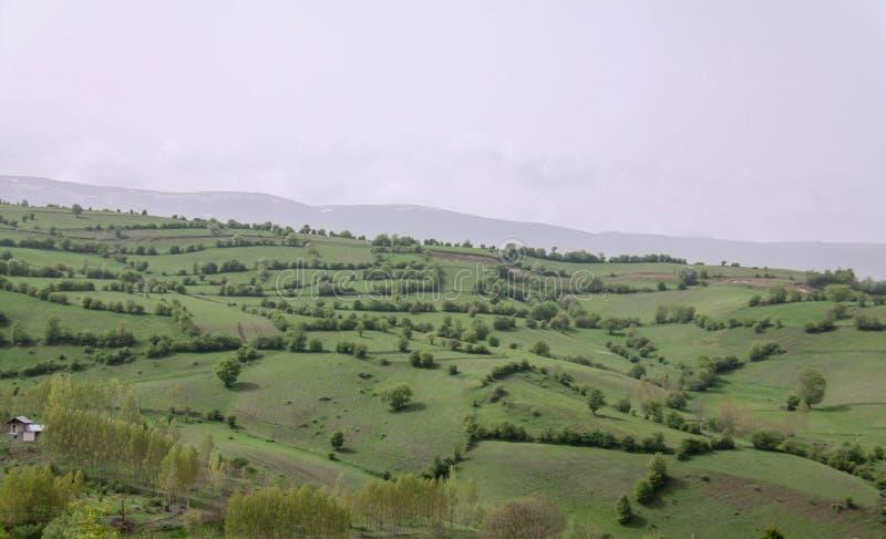 Le pianure uniche abbelliscono con gli alberi nel Nord dell'Iran, Gilan fotografie stock libere da diritti