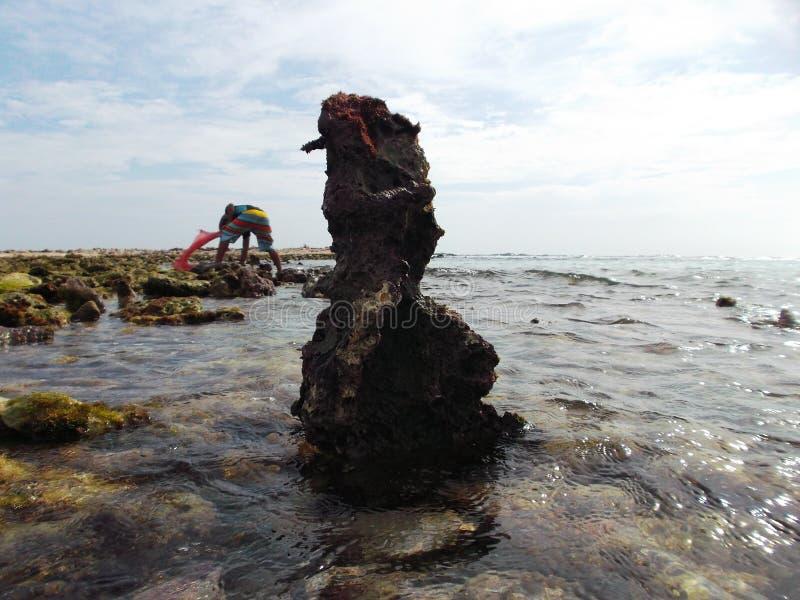 Le pietre hanno coperto di alga sulla costa dell'isola della tartaruga nel Venezuela immagine stock