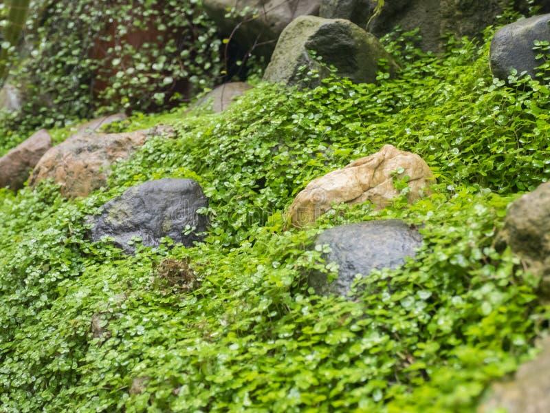 Le pietre nell'erba gradiscono il muschio fotografia stock libera da diritti