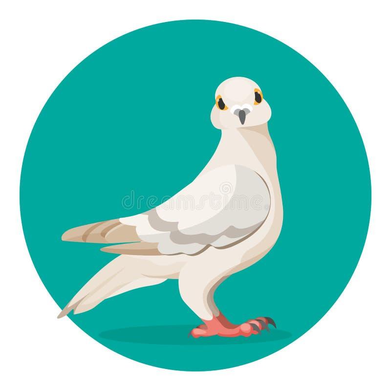 Le pigeon gris se tient sur l'illustration au sol de vecteur de l'oiseau populaire illustration libre de droits