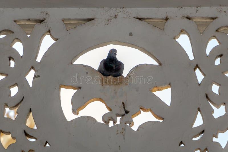 Le pigeon se repose sur la décoration sur les murs photos stock