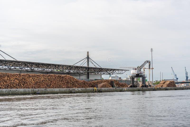 Le pile enormi di tronchi di albero si trovano in un porto di trasbordo e sono caricate da una grande gru immagine stock libera da diritti