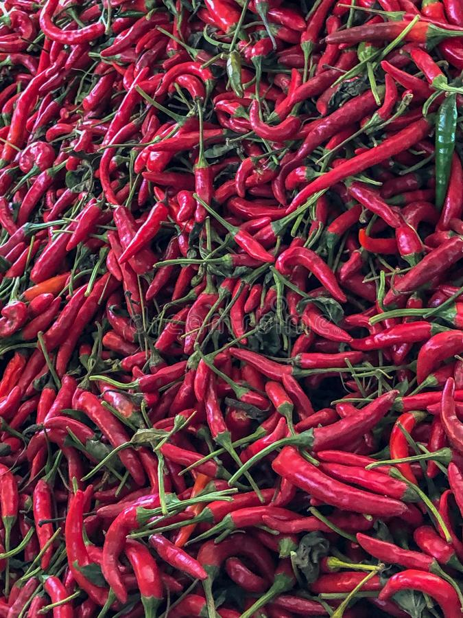 Le piment rouge poivre en vente à un souk de stalle du marché à Agadir, Maroc, Afrique image stock