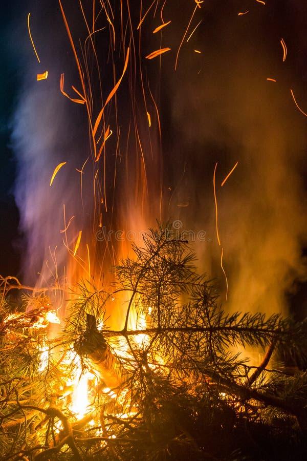 Le pin brûlant s'embranche feu de camp de nuit images stock
