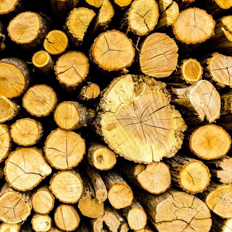 Le pin a coupé le bois de chauffage empilé dans le tas de bois Fond texturisé photo stock