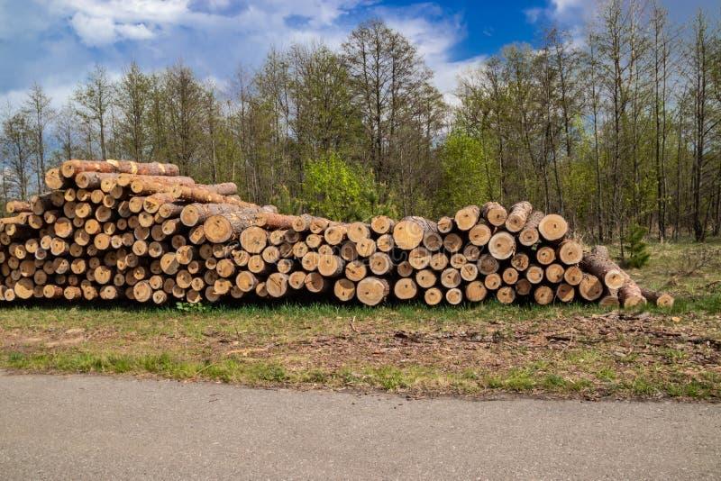 Le pin vert frais industriel pr?vu de d?boisement au printemps se trouve au sol le long de la route photos stock