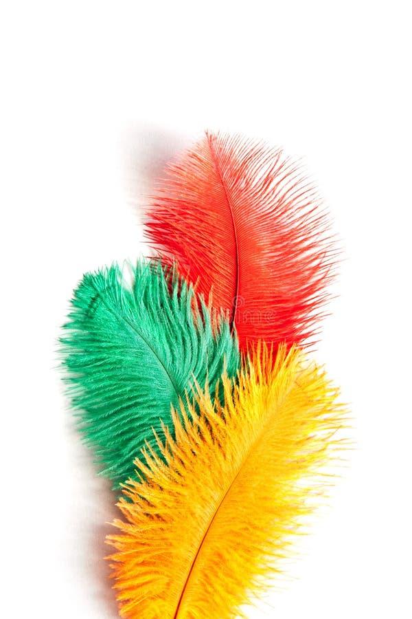 Le piume artificiali a tre colori si chiudono su immagini stock libere da diritti