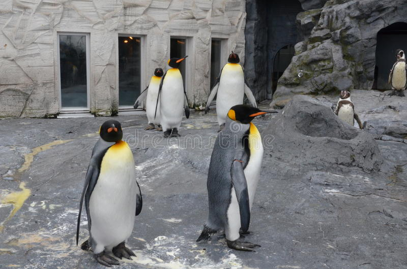Le piume del pinguino di re fotografia stock libera da diritti