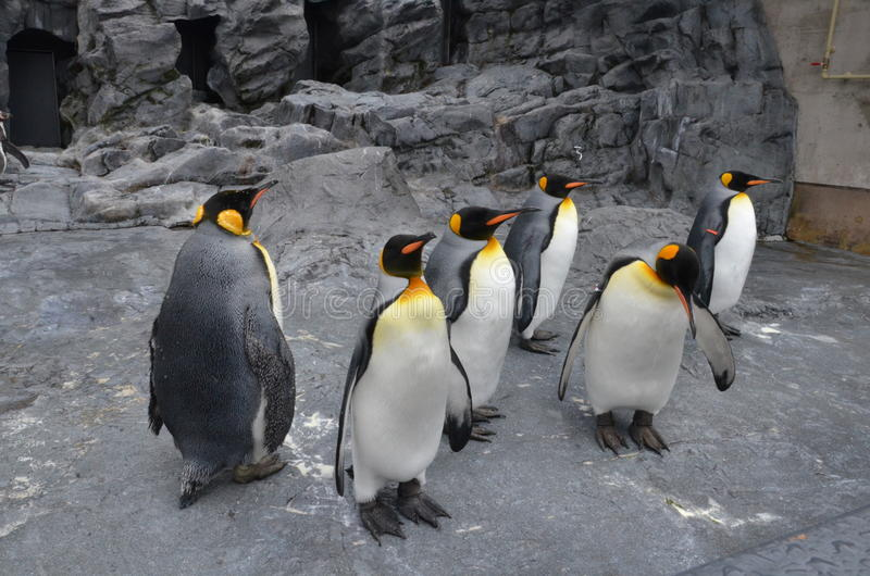 Le piume del pinguino di re fotografie stock libere da diritti