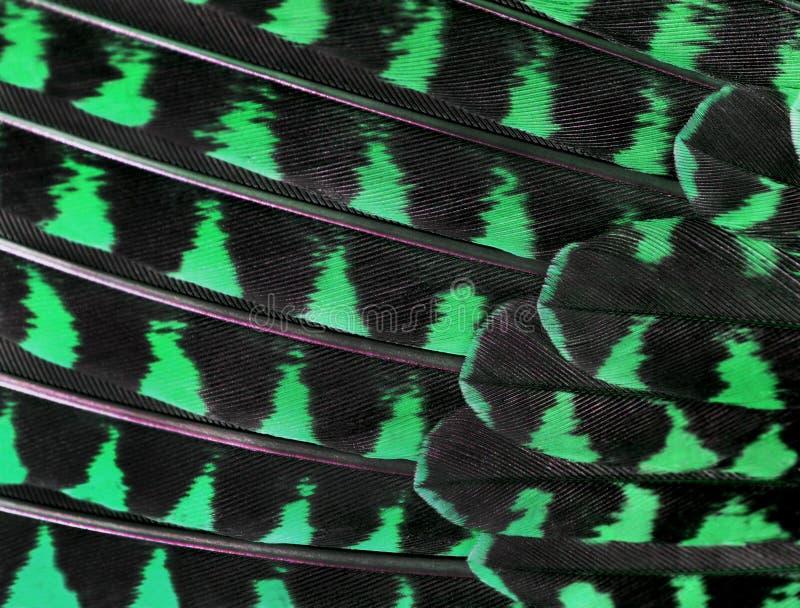 Le piume variopinte di un primo piano dell'uccello immagini stock libere da diritti