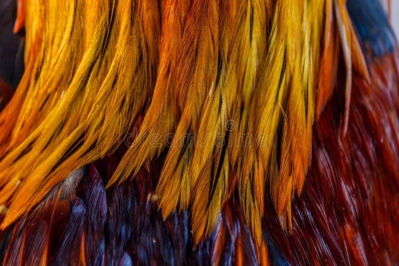 Le piume variopinte, pollo mette le piume alla struttura del fondo fotografie stock libere da diritti
