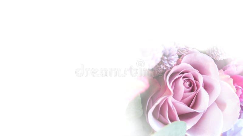 Le plan rapproché de bourgeon de Rose d'une tonalité pourpre douce sur un fond blanc, l'image est isolé Seul arbre congelé photos libres de droits