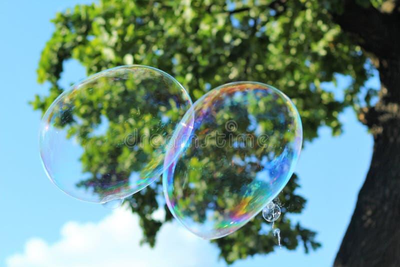 Le plan rapproché de deux a joint les bulles de savon géantes en parc d'été images libres de droits