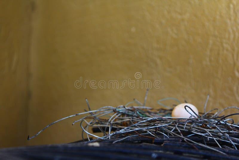 Le plan rapproché de l'oeuf de l'oiseau avec le nid fait de fils en aluminium aménagent en parc image libre de droits
