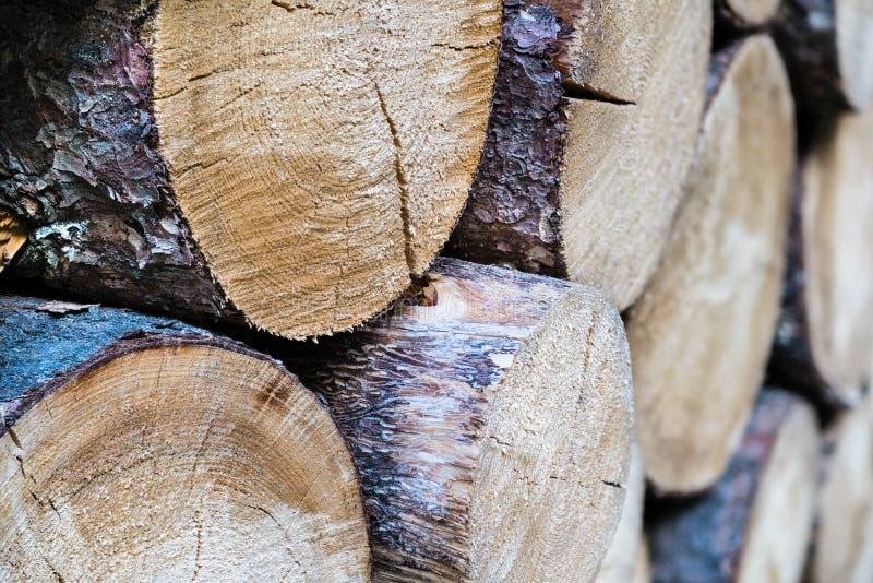 Le plan rapproché de la réserve a scié des firewoods des troncs crus d'arbre forestier photographie stock