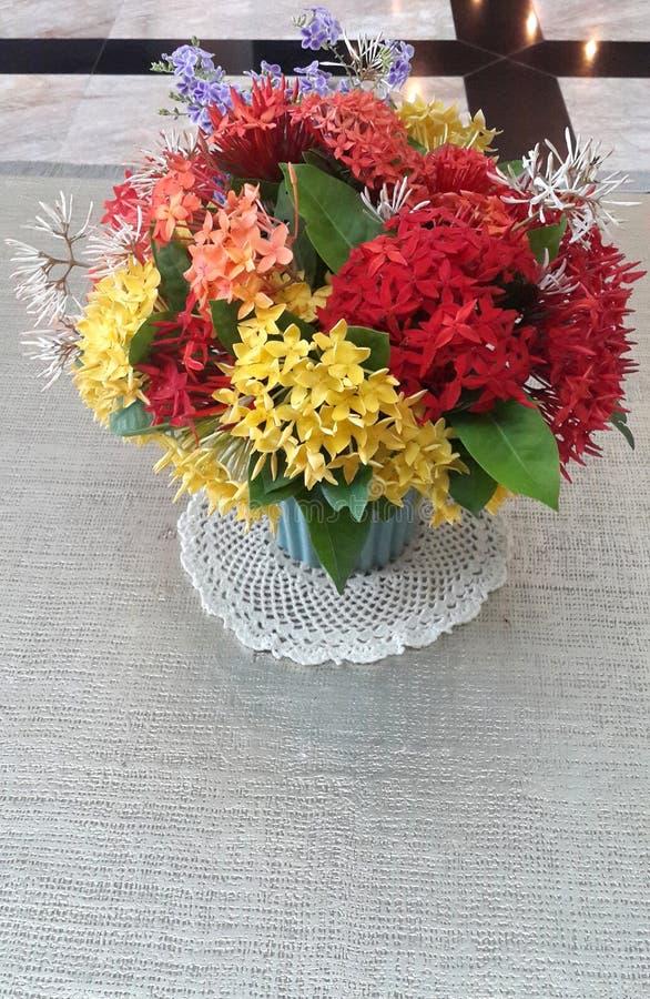Le plan rapproché du jasmin d'Ixora coloré/Indien occidental fleurit le bouquet dans le vase en céramique avec l'espace de copie images libres de droits