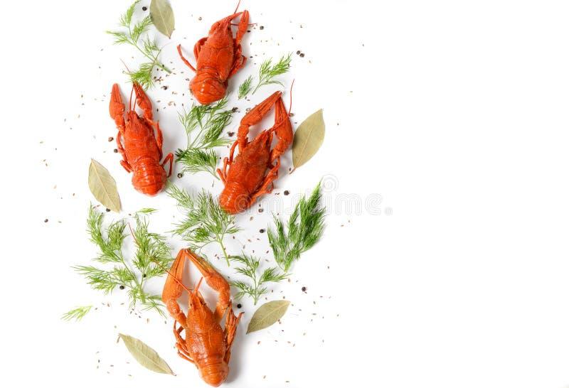 Le plat de fruits de mer, rouge a bouilli des écrevisses sur le fond blanc, photo de vue supérieure Genre de casse-croûte pour la image libre de droits