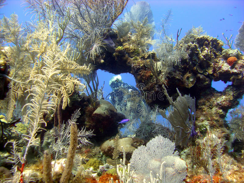Le plongeur apprécie un piqué ensoleillé image libre de droits
